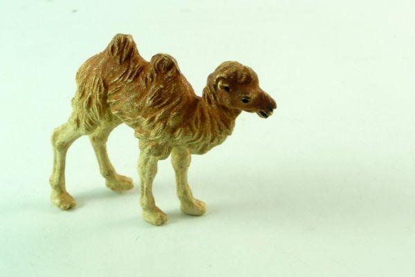 Britains Junges Kamel, Nr. 1352